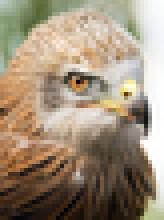 http://webdav.tuebingen.mpg.de/pixel/enhancenet/files/eagle-nn.jpg