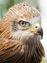 eagle-pat.jpg